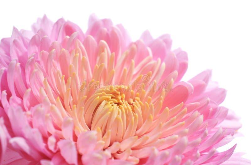 Download Fiore immagine stock. Immagine di fioritura, bellezza - 7324519