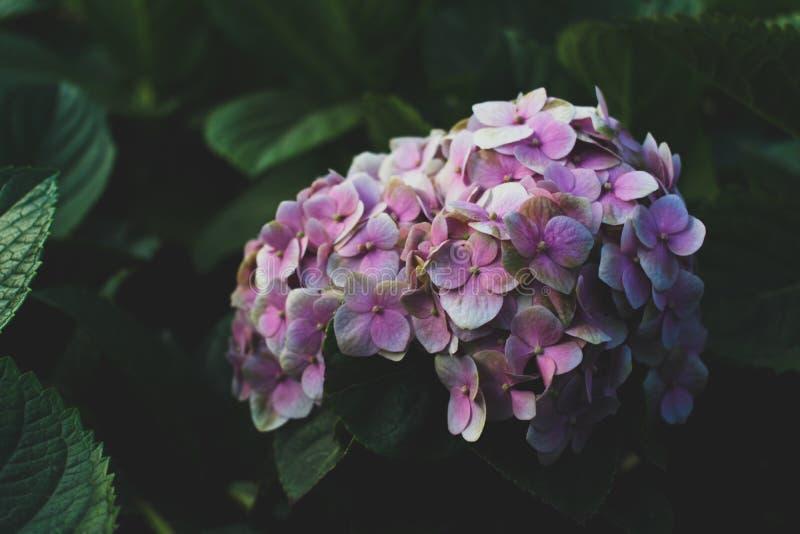 Fiore fotografia stock