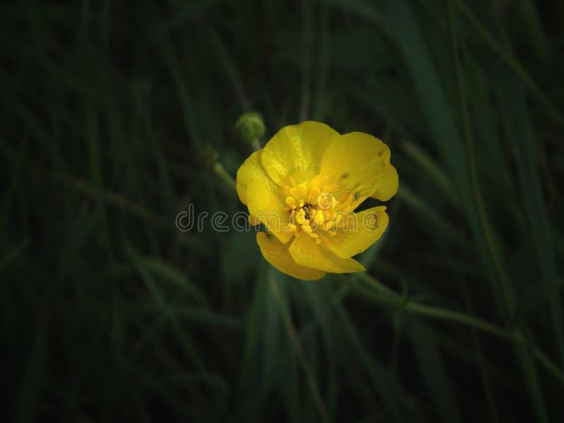 Fiore fotografie stock