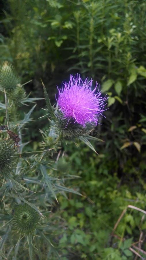 Fiore abbastanza gonfio fotografia stock