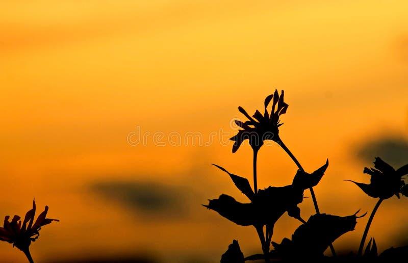 Fiore al tramonto immagine stock libera da diritti