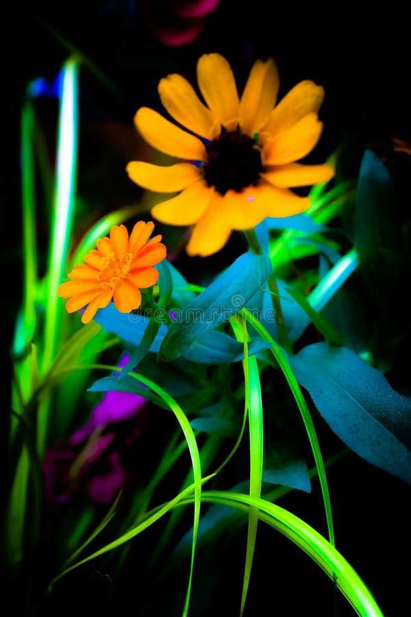 Fiore arancio di estate fotografia stock libera da diritti