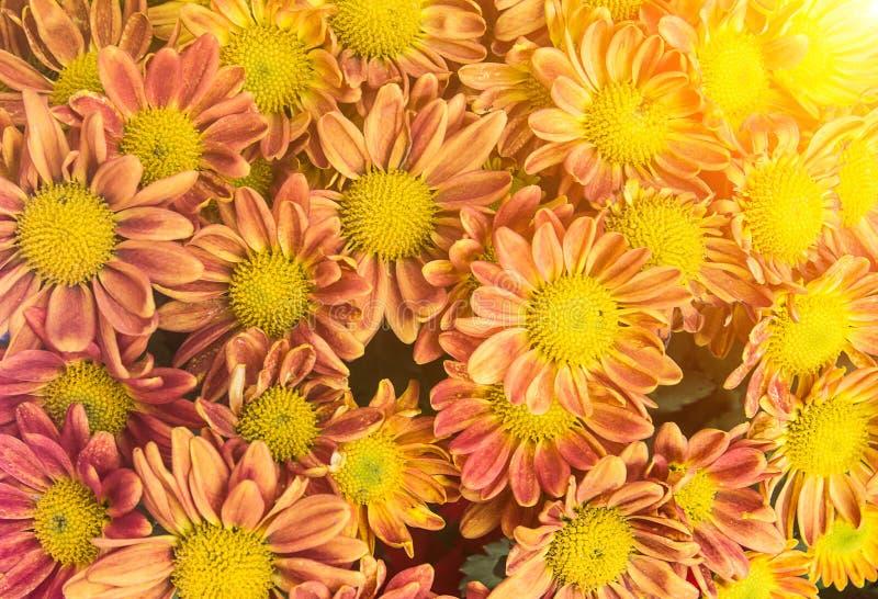 Fiore arancio o giallo su fondo bianco spr arancio o giallo fotografia stock libera da diritti