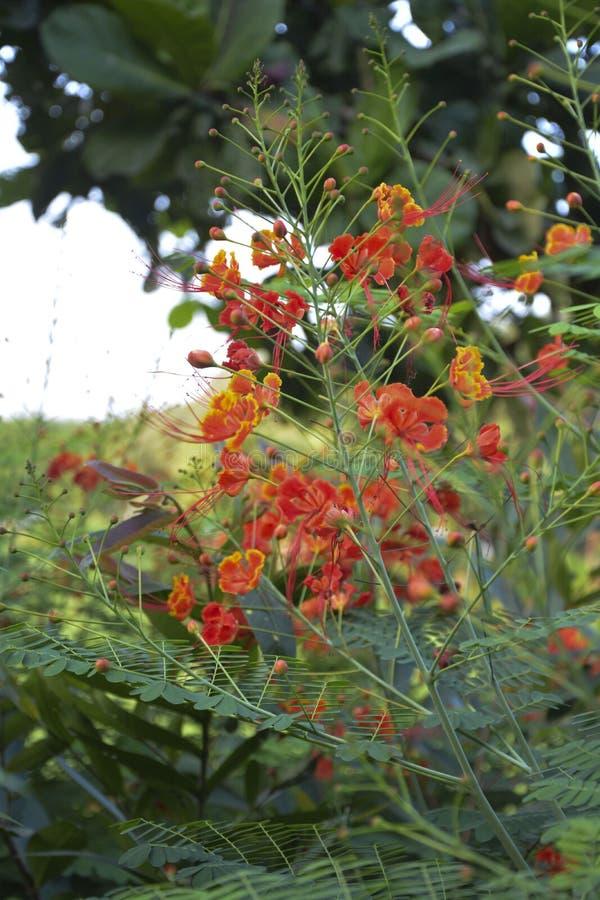 Fiore arancio sottolineato - 3 fotografia stock