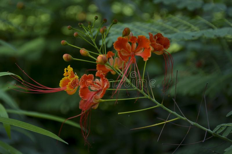 Fiore arancio sottolineato - 4 fotografia stock