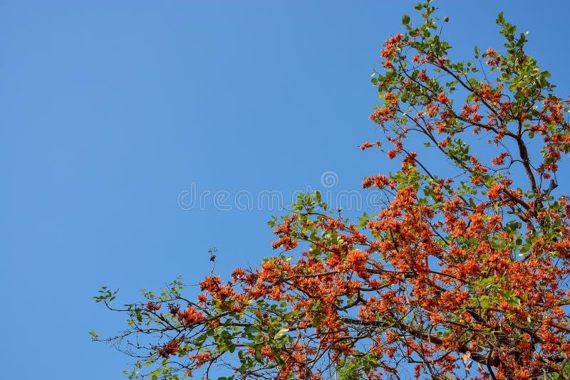Fiore arancio sull'albero fotografia stock libera da diritti