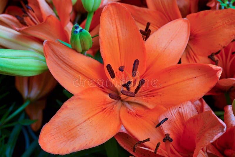 Fiore-arancio tropicale fotografie stock