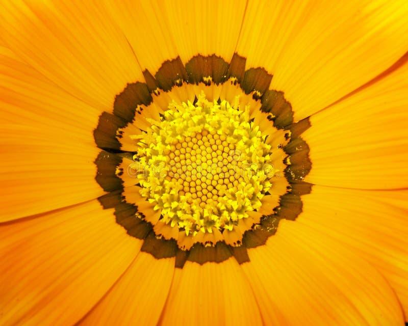 Fiore arancione 01 immagine stock