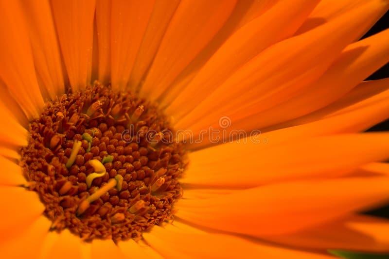 Fiore arancione 1 fotografie stock