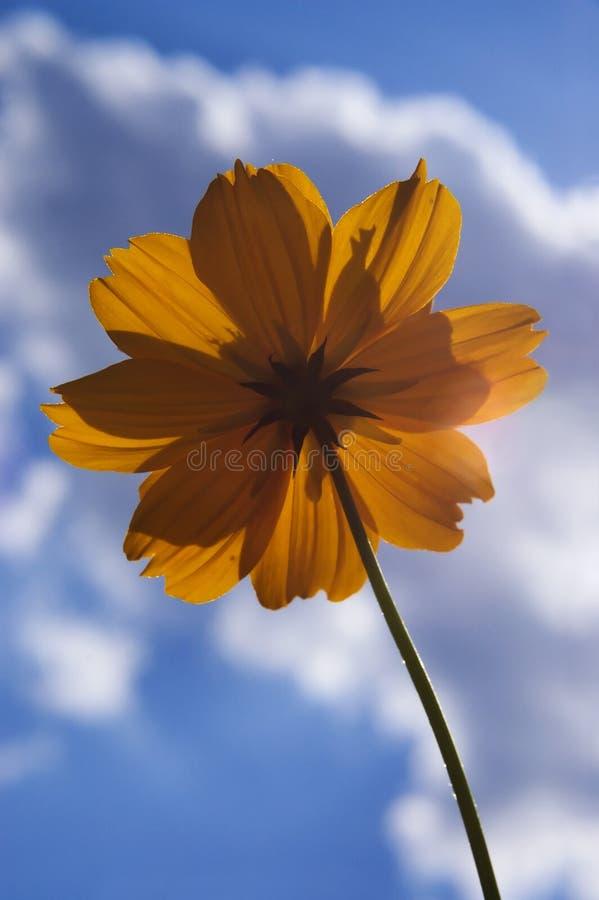 Download Fiore Arancione Contro Cielo Blu Fotografia Stock - Immagine di sole, nuvoloso: 210416