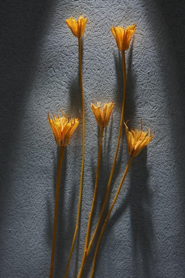 Fiore asciutto fotografie stock