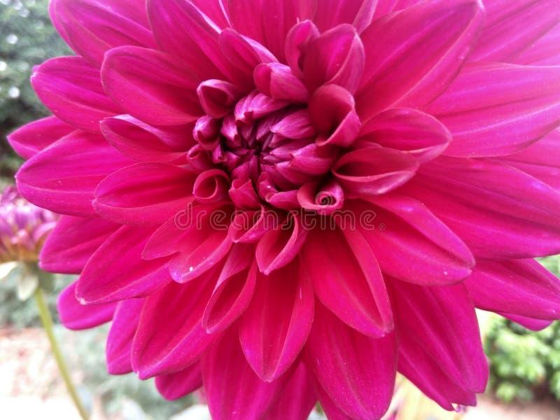 Fiore bello immagini stock