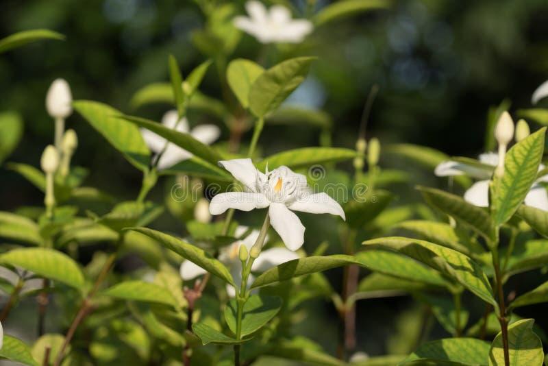 Fiore bianco con la macro fotografia stock