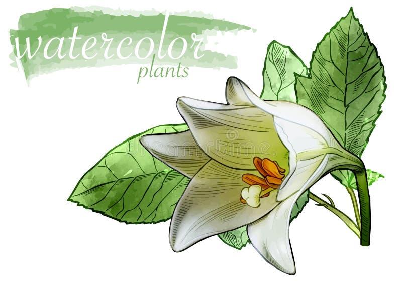 Fiore bianco dell'acquerello con le foglie illustrazione di stock