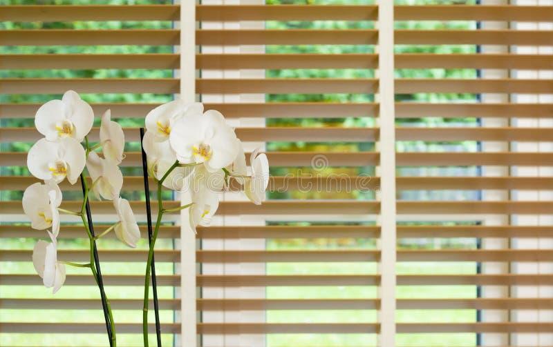 Fiore bianco dell'orchidea davanti ad una finestra con i paraocchi di legno fotografie stock libere da diritti
