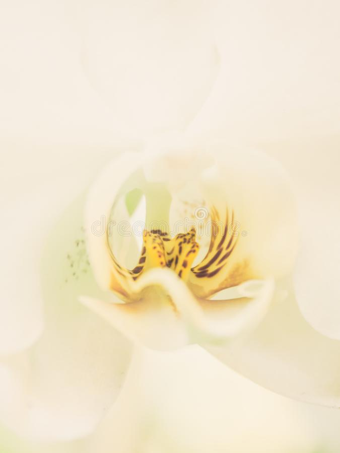 Fiore bianco della natura del fondo orchidea astratta del primo piano della bella fotografie stock