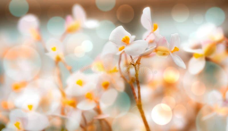 Fiore bianco della sorgente fotografia stock libera da diritti