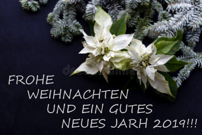 Fiore bianco della stella di Natale con l'albero di abete e neve su darkbackground Cartolina di Natale di saluti cartolina christ fotografia stock libera da diritti