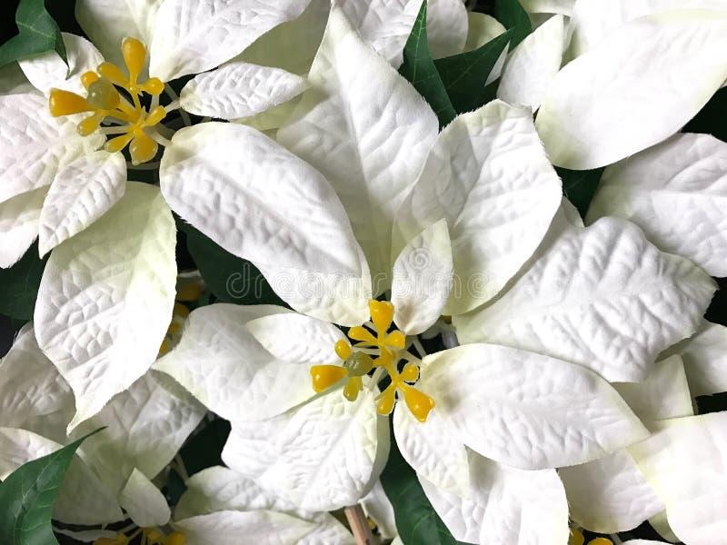 Fiore bianco di natale della stella di Natale del bello faux immagine stock libera da diritti