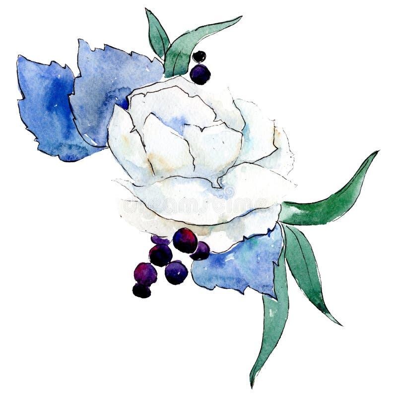 Fiore bianco Elemento isolato dell'illustrazione del fiore Insieme dell'illustrazione del fondo Mazzo di disegno acquerello dell' royalty illustrazione gratis