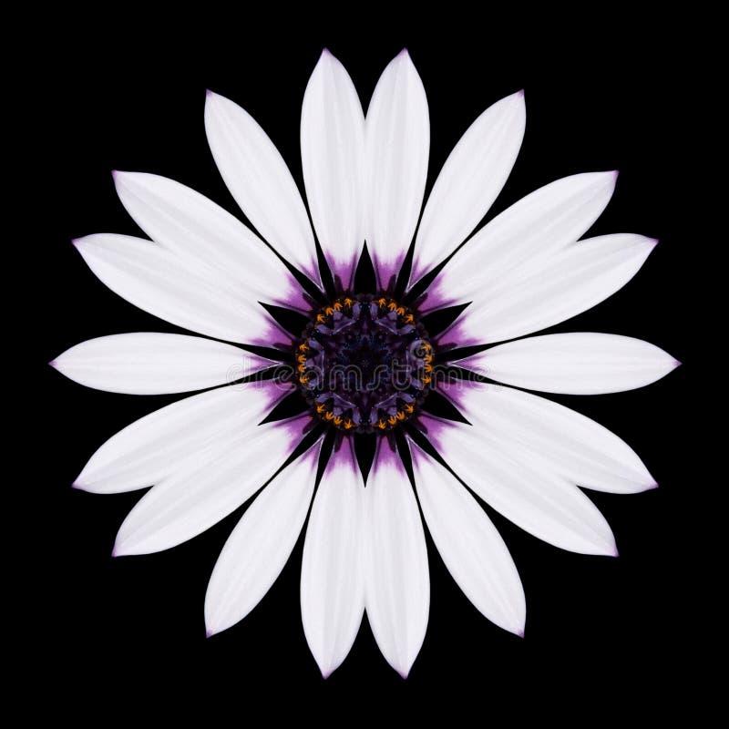 Fiore bianco Mandala Kaleidoscope Isolated sul nero immagini stock libere da diritti
