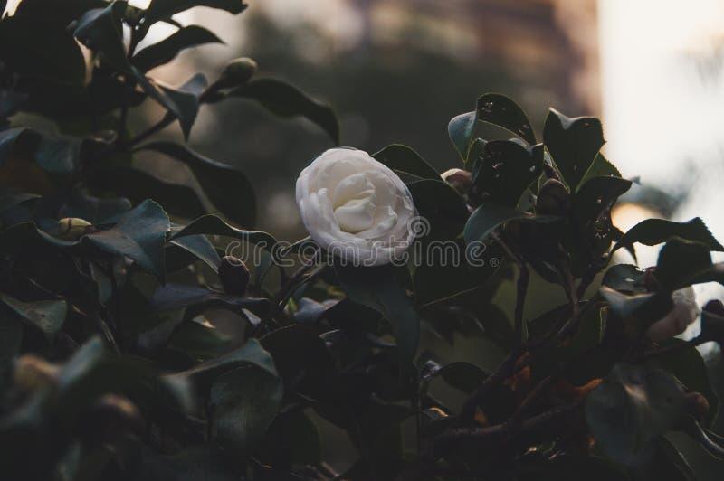 Fiore bianco in mezzo al verde fotografia stock