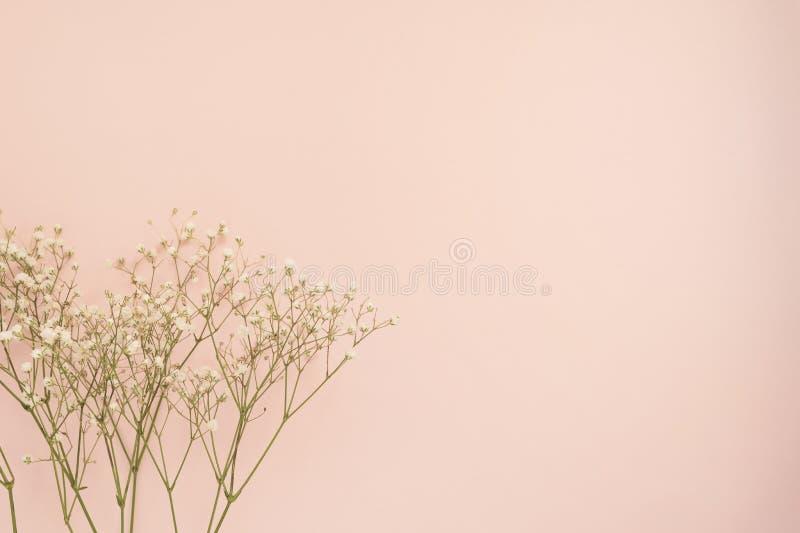 Fiore bianco semplice delle rose su fondo rosa punchy Copi lo spazio, struttura floreale Nozze, carta di regalo, giorno del ` s d fotografia stock