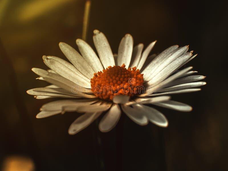 Fiore bianco su un fondo vago immagini stock