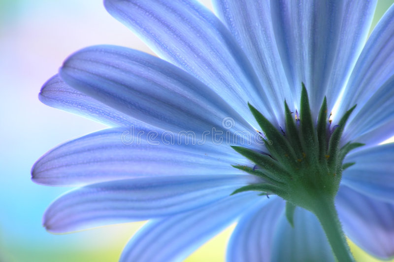 Fiore blu immagini stock