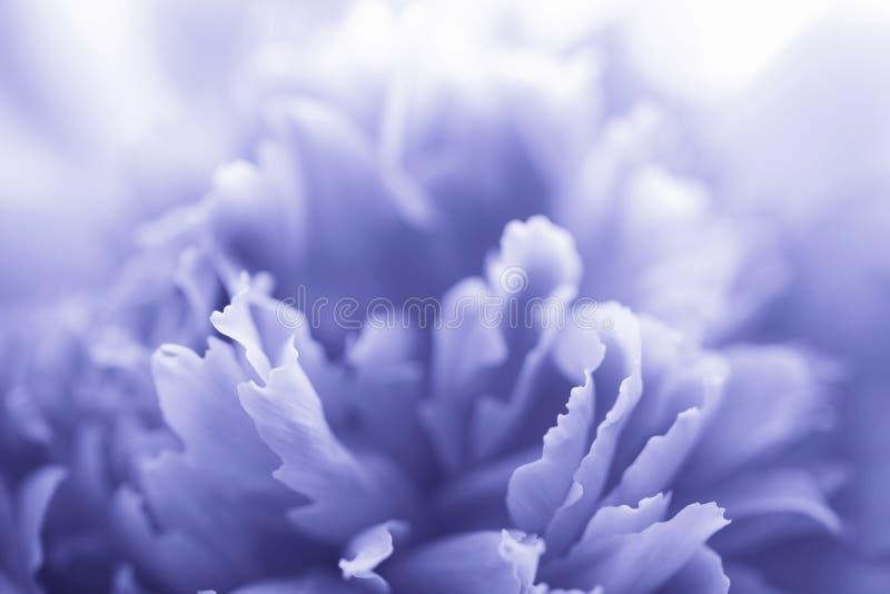Fiore blu del peony fotografie stock libere da diritti