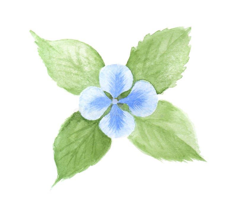 Fiore blu dell'acquerello con le foglie verdi Illustrazione disegnata a mano, isolata su bianco illustrazione vettoriale