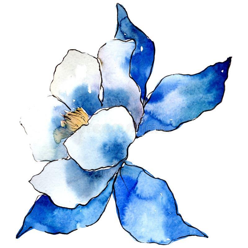 Fiore blu di aquilegia Elemento isolato dell'illustrazione di aquilegia Insieme dell'illustrazione del fondo dell'acquerello illustrazione di stock