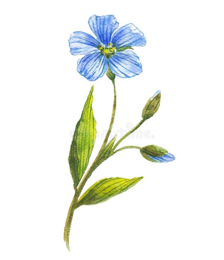 Fiore blu di lino royalty illustrazione gratis