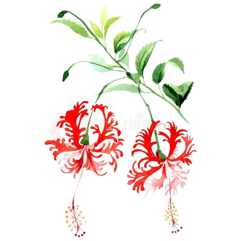 Fiore botanico dell'ibisco rosso Insieme dell'illustrazione del fondo dell'acquerello Acquerello di disegno acquerello di modo is illustrazione di stock