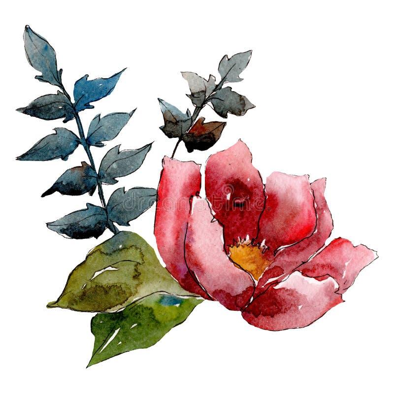 Fiore botanico rosso Elemento isolato dell'illustrazione del mazzo foglio verde Insieme della priorità bassa dell'acquerello royalty illustrazione gratis