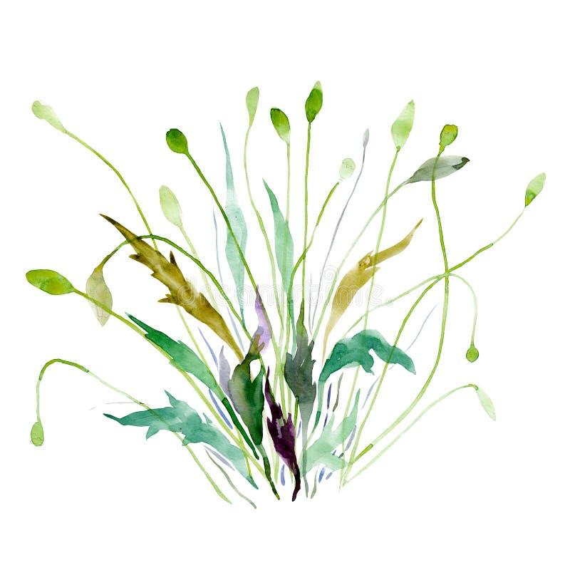 Fiore Bush Illustrazione disegnata a mano dell'acquerello Oggetto isolato su fondo bianco Elemento per le carte, feste, nozze illustrazione di stock