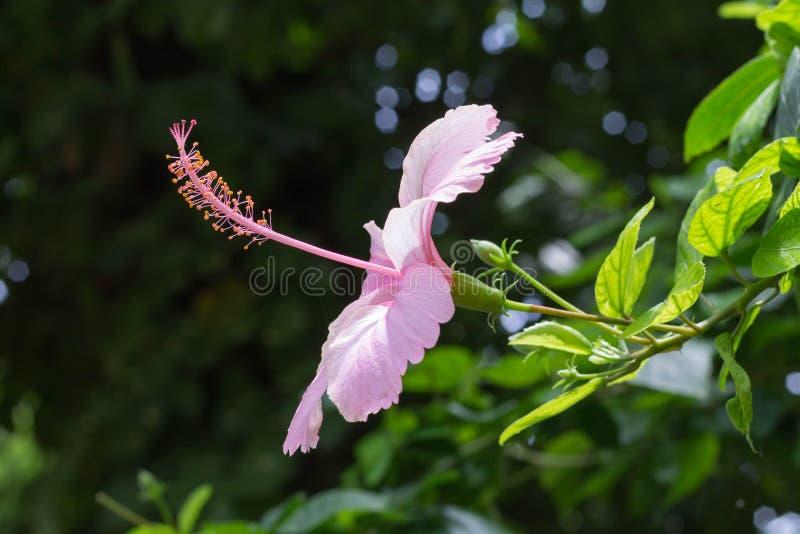 Fiore che affronta Sun fotografia stock libera da diritti