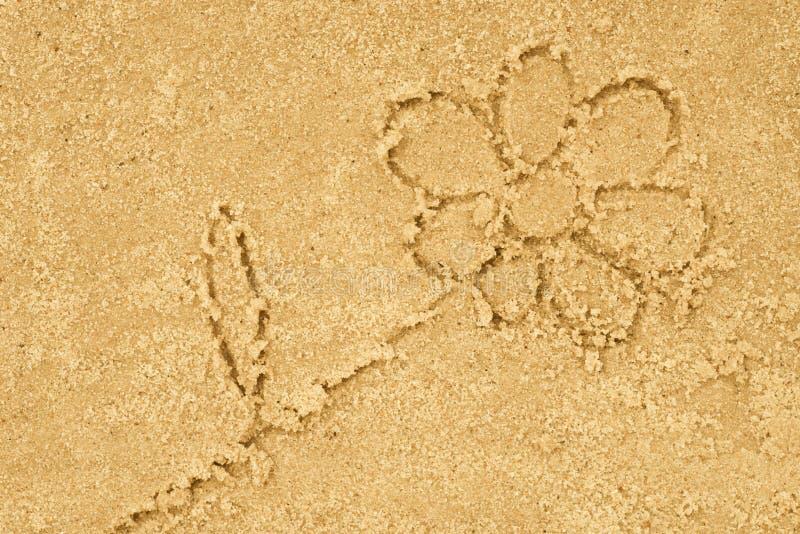 Fiore che assorbe sabbia fotografia stock libera da diritti