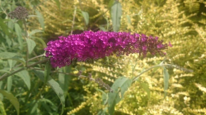Fiore Colourful immagine stock libera da diritti
