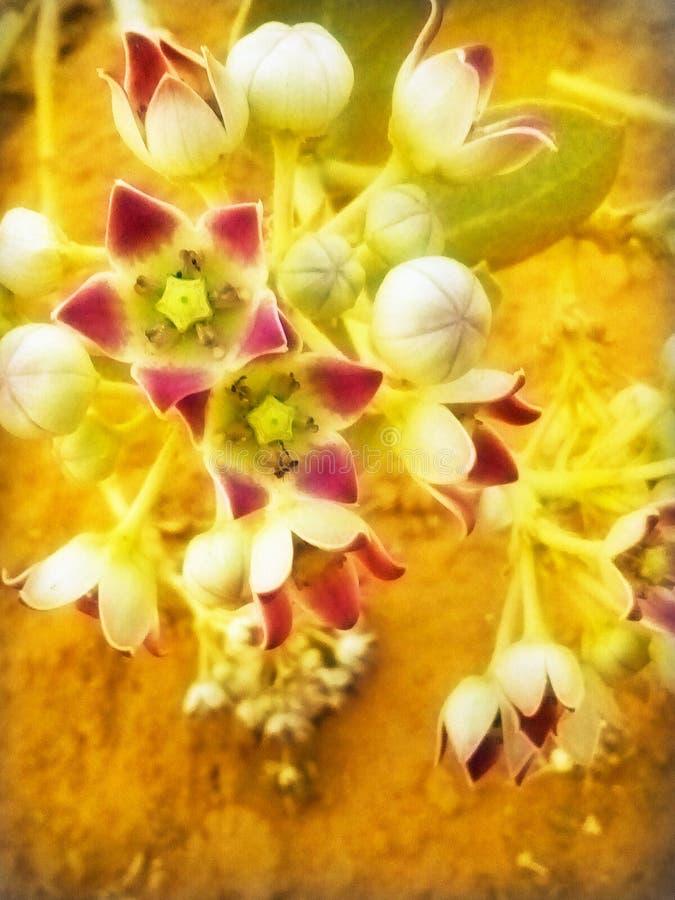 Fiore con immagini stock libere da diritti