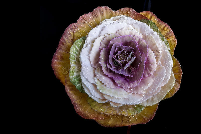 Fiore con le gocce dell'acqua immagine stock