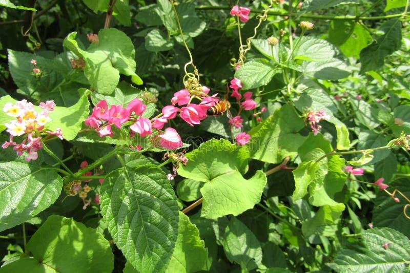 Fiore con miele fotografie stock libere da diritti