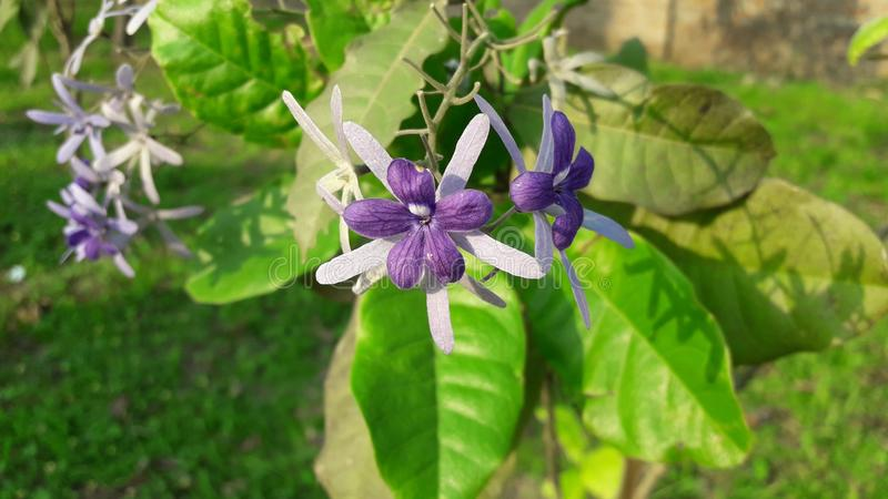 Fiore con sfondo naturale piacevole fotografia stock
