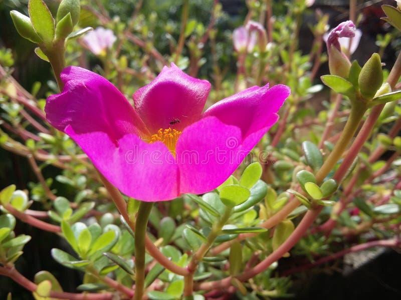 Fiore con stile di vita dell'insetto fotografia stock