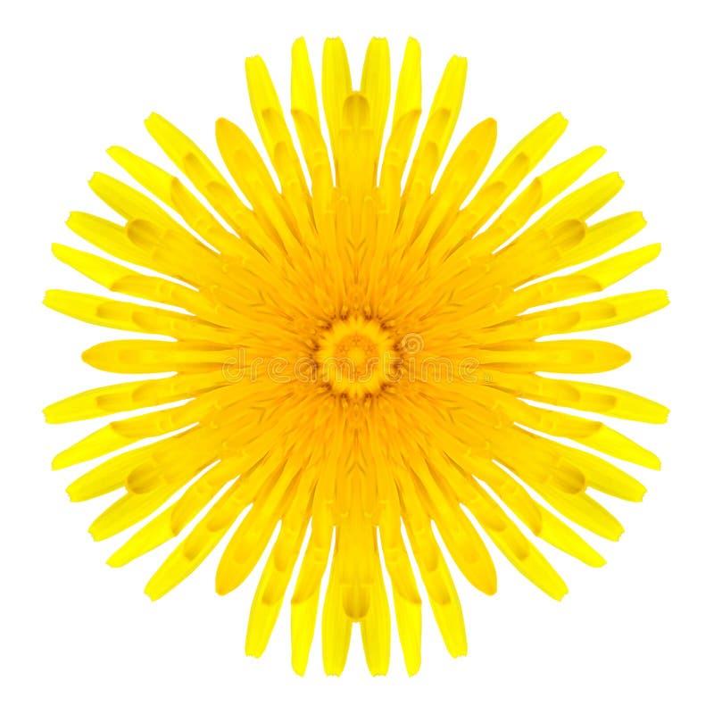 Fiore concentrico giallo del dente di leone isolato su bianco. Mandala Design immagine stock libera da diritti