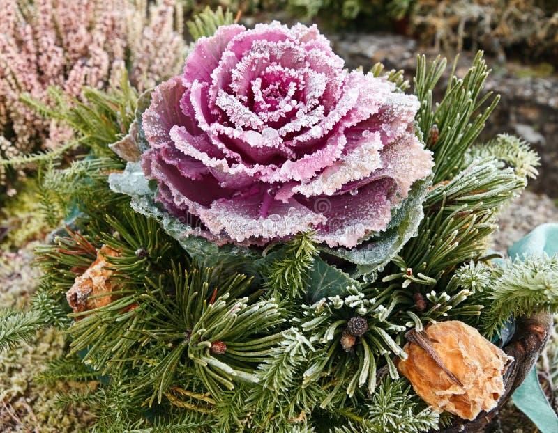 Fiore congelato fotografie stock libere da diritti