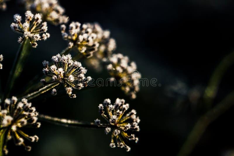 Fiore congelato nel tono blu, fuoco molto basso fotografia stock libera da diritti