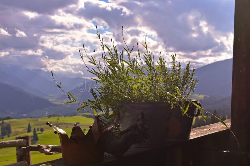 Fiore conservato in vaso della lavanda su un balcone che trascura una valle nelle alpi di Kitzbuehel fotografie stock libere da diritti