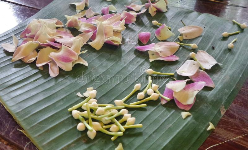 Fiore dal giardino per la fabbricazione della ghirlanda immagine stock libera da diritti