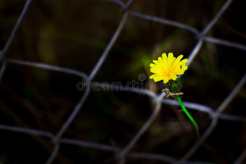 Fiore dalla maglia fotografie stock